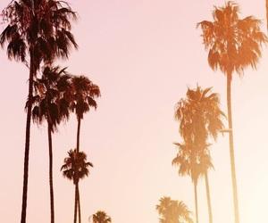 palmtrees image