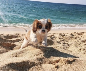 beach, puppy, and animal image