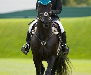 athlete, showjumping, and eventing image