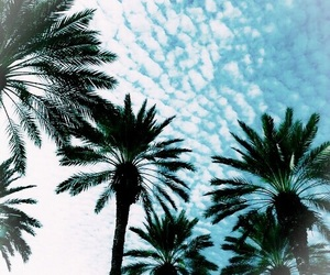 blue, palm trees, and summer image