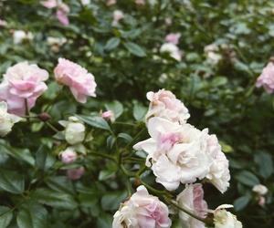 bush, green, and pink image