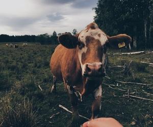 adventure, animal, and animals image