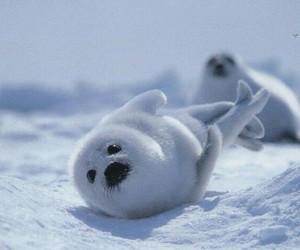 animals, seal, and snow image