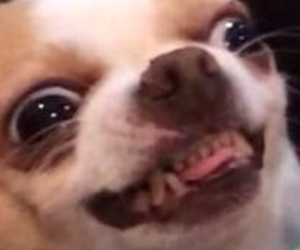 dog, funny, and reaction image
