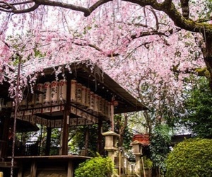 japan, kyoto, and asia image