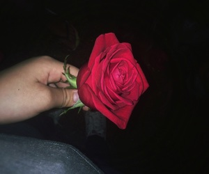 flower, picture, and rose image
