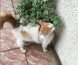 cat, cats, and قطة image