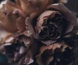 dark, dying, and floral image