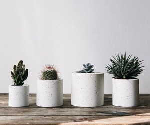 cactus, plants, and decor image