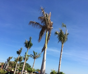 adventures, palm trees, and summer image