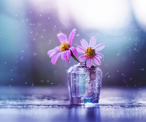 flowers and still life image