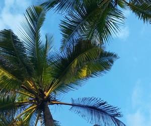 beach, palm, and palmtrees image