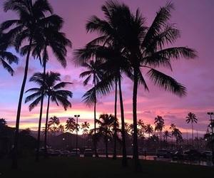 aesthetic, palm tree, and sunrise image