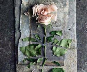 broken, cut, and flower image