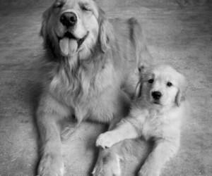 animal, dog, and little image