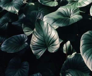 green, dark, and leaves image