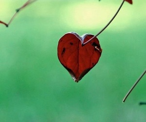 nature and heart image