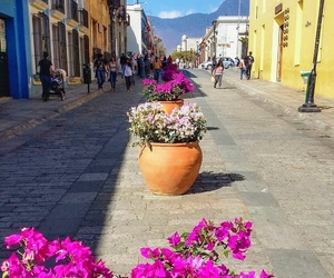 colors, flowers, and oaxaca image