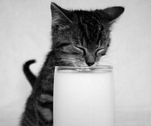 cat, cute, and milk image