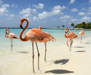 flamingo, beach, and ocean image