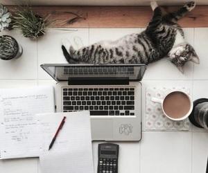 study, school, and cat image