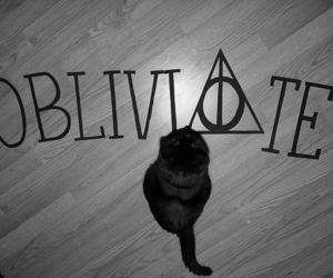 harry potter, obliviate, and cat image