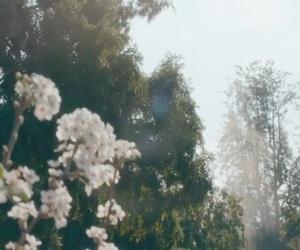 fetish, flowers, and gomez image