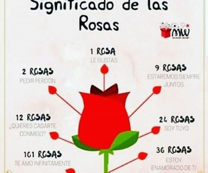 red, rosas, and roses image