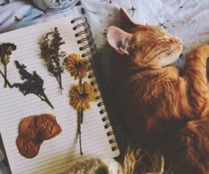cat, flowers, and wallpaper image