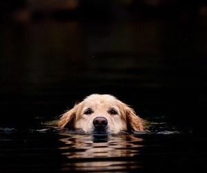 dog, animal, and water image
