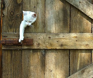cat, animal, and door image