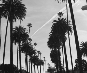 background, palmtree, and palmtrees image