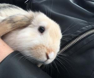 animal and bunny image