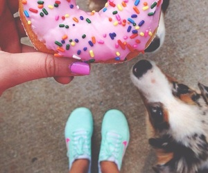 dog and donuts image