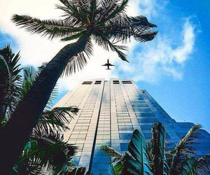 palm trees and plane image