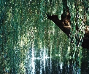 water, willow, and willow tree image