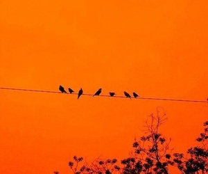 orange, bird, and aesthetic image