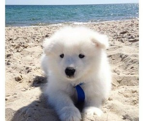 animals, fluffy, and puppies image
