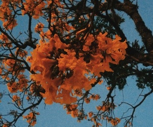 orange, flowers, and blue image