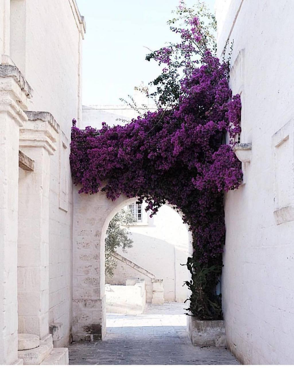 flowers, purple, and architecture image