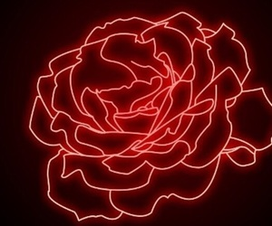 red, rose, and neon image