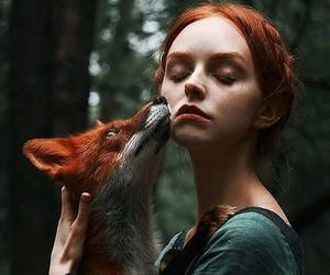 fox, nature, and red image