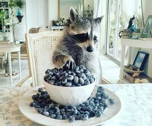 amazing, animals, and cats image