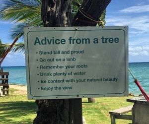 tree, advice, and nature image
