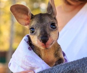 kangaroo, animal, and cute image