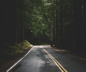 road, forest, and nature image