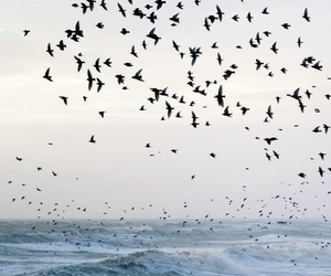 bird, sea, and ocean image