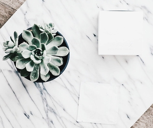 aesthetic, plant, and cactus image