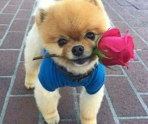 dog, cute, and rose image