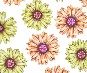 daisies and wallpaper image